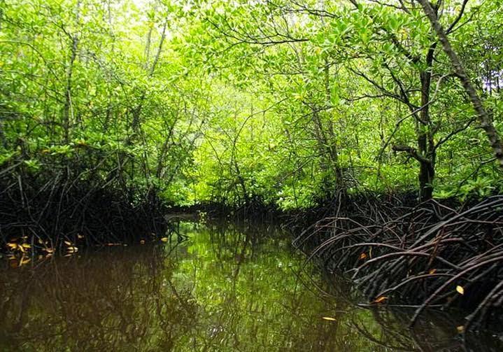 Ini Sebelas Manfaat Hutan Bakau Bagi Kehidupan Manusia
