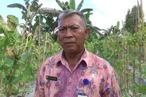 Dukung Swasembada, UPTD Balai Benih Siapkan Bibit Unggul Berkualitas