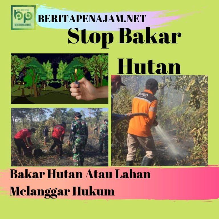 Bakar Hutan Atau Lahan Melanggar Hukum